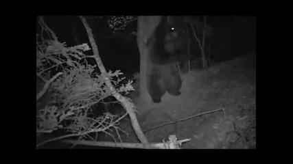 Ночь медведь