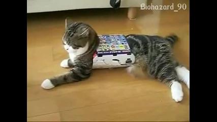 Шантаво коте пристрастено към кутий от диетични вафли!:–)