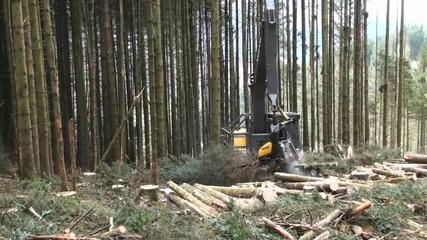 Скоростно рязане на дървета със Volvo ec240cl