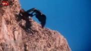 7 нападения на орел върху хора и животни