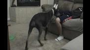 Куче събужда стопанина си по много интересен начин!