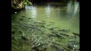 Пещера Пълна С Риби В Mae Hong Son Thailan