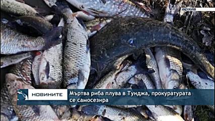 Мъртва риба плува в Тунджа, прокуратурата се самосезира