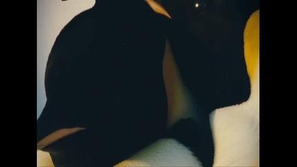 Брачният танц на пингвините