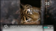 Обсъждат сигурността в столичния зоопарк заради избягалия тигър