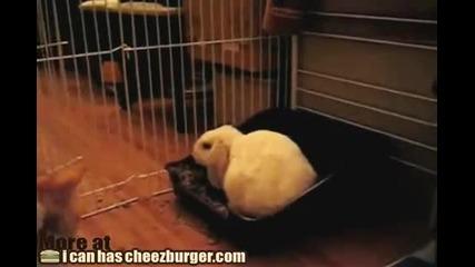 Смях! Заека си пази леглото :d