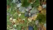Луди От 138мо Падат В Езерото =D