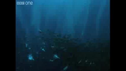 Подводен Армагедон