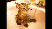 Коте В Транс