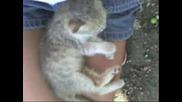 Най - Сладките Котенца На Света