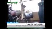 Бездомно куче възпитан пътник в трамвая !