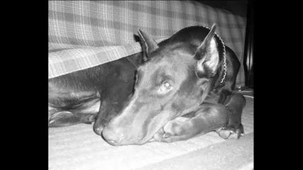 My Doggy Xaaxxax )
