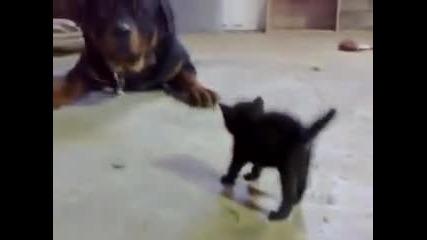 от това което ще стане мачка