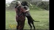 Кучe танцува като човек!