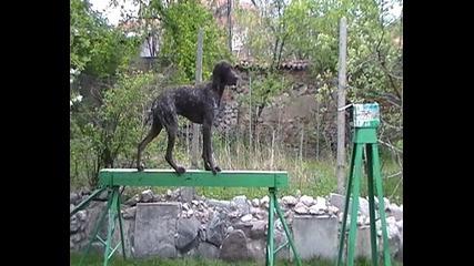 Куче Имащо Отношение Към Лова Се Упражнява В/у (тя Е Само Средство) Академия Найк