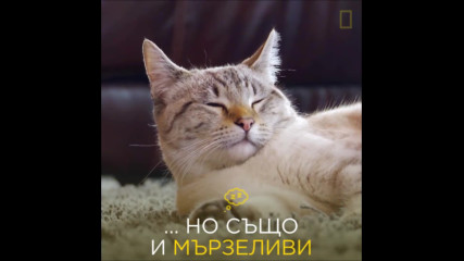 Световен ден на котките