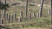 Цигани унищожават горите край Стара Загора