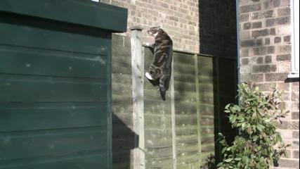 Изумително! Котка в скок на забавен каданс