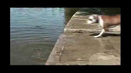 Кучето и мокрият камък