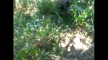 Костенурки Се шибат