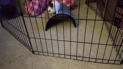 Заек преминава през тясна клеткa с лекота