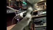 Котки Пеят Коледна Песен(много Смях)