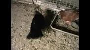 Паламарски Гълъби - Кубрат - Информационен
