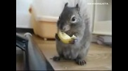 Вярвате Ли Колко Сладко Се Яде Лимон?