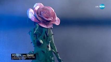 Розата изпълнява