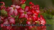 Тропическа градина - цветя и пеперуди
