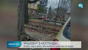 Дърво падна върху автомобил в центъра на Кюстендил