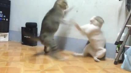 наи барзите котки на света !!!(100%смях)