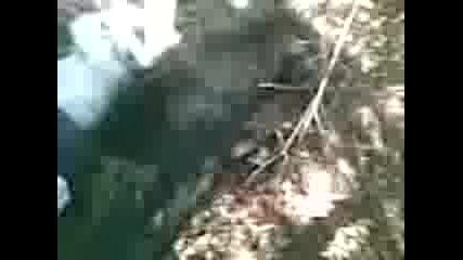 Ловните кучета на с.езерче