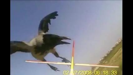 Врана напада безпилотен самолет