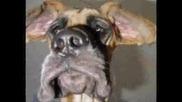 Смешни Снимки С Кучета