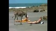 Магаренце на плажа :d