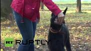 Русия: Лае без да хапе? Преобразете кучето си със свирепа върколашка муцуна!