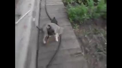 Жена заповядва на кучето да вкара котката вътре в къщата. Как кучето я носи е почти нереално