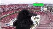 Гарван се забавлява пред камера на стадион