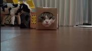 Кутия и Мару