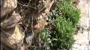 Разцъфте ли се цветя в село Горна Диканя - 2