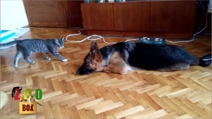 Приключенията на Том и Арая. Невероятното приятелството между куче и коте.