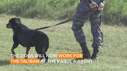 Dogs left behind after US evacuation from Afghanistan