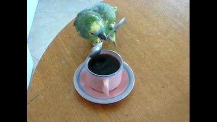 Kултурен папагал пие кафе с лъжица .