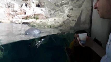 Aquarium Di Genova 2018