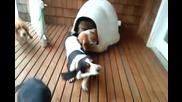 Пет кучета в една къщичка