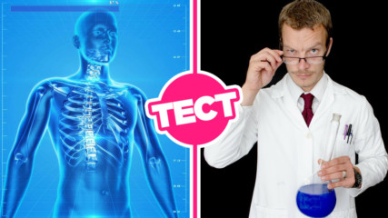 Колко добре познаваш тялото си? 7 прости въпроса по анатомия!