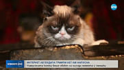 Почина най-известната писана в света - Сърдитата котка
