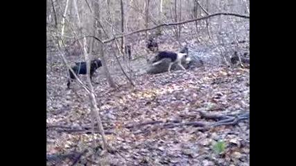 lov na praseta drujina prelez