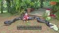 Гигантска анаконда уловена след като изяла цяло куче